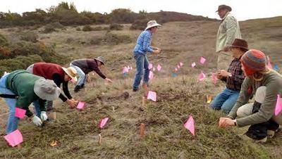 Seeding Thornmint Plots