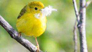 Birding Course