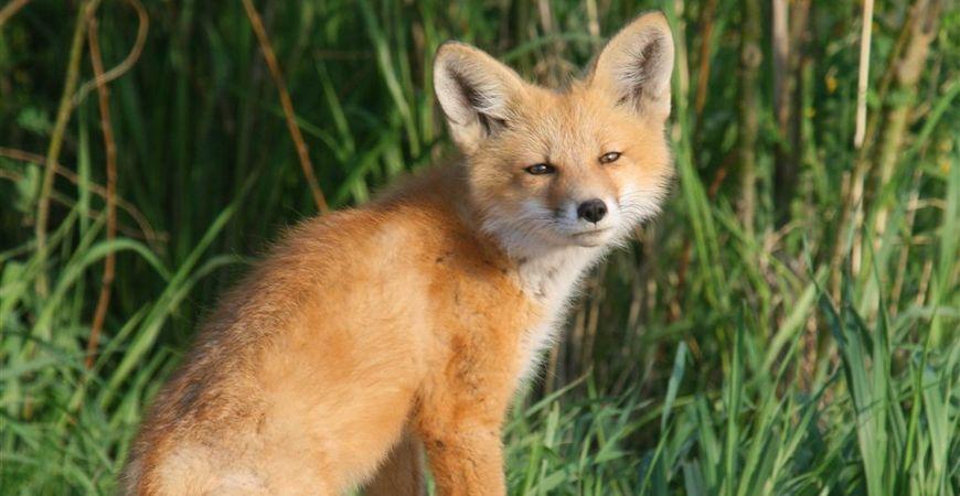 Fox, Phil Smith