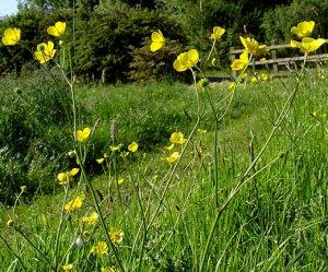 Wildflower meadow photos