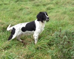 Skye pauses to look for her master...
