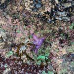 Glow-in-the-Dark-Starfish-Andrew-Krauss-