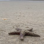 Michael-Hill-Starfish-Haystack