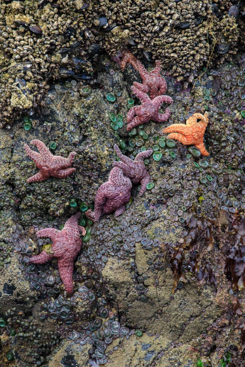 Anne Rapp Starfish gathering (2)