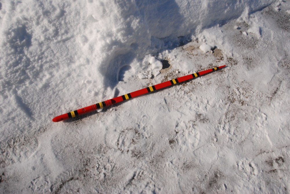 Slithering and Sliding Snow Snakes at Highland State Recreation Area! (3/6)