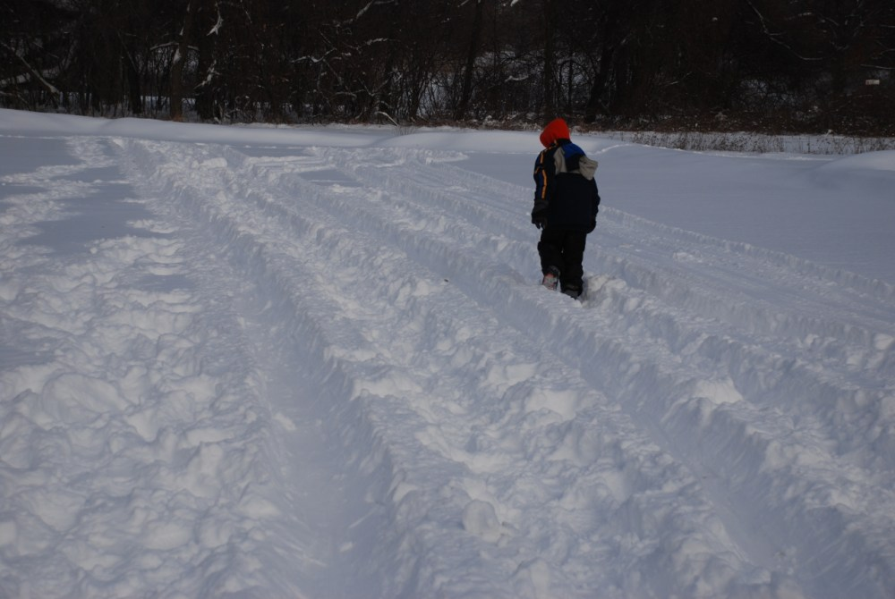 Snow Snake Population Growing in Highland Recreation Area (5/6)