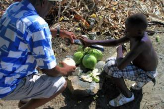 opening green coconuts