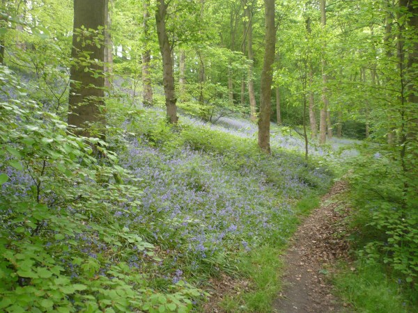 A Spring Stroll | Friends Of Longley Woods