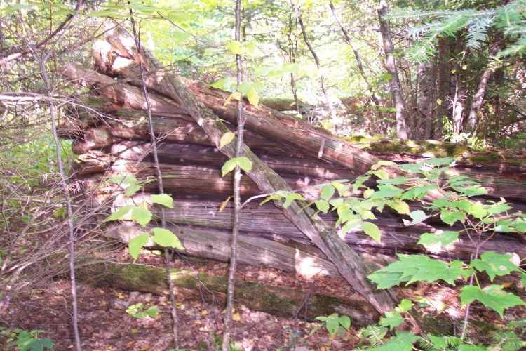 Remains of logging camp structure on Bear Island