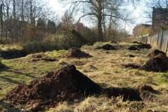 The prepared orchard site