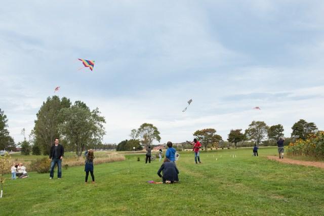 Kites_090