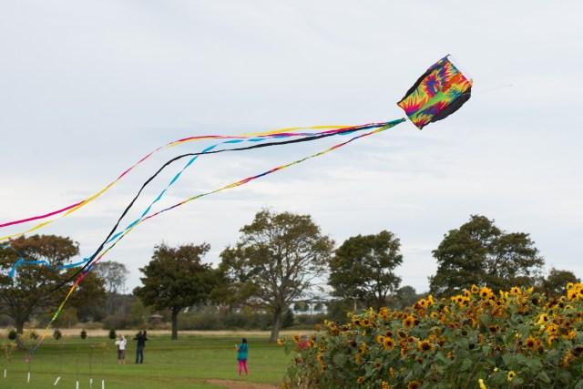 Kites_113