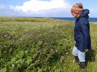 Monitoring bumblebees, Tiree