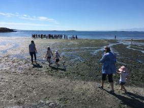 BeachSeine June 25-2017 Wiley5
