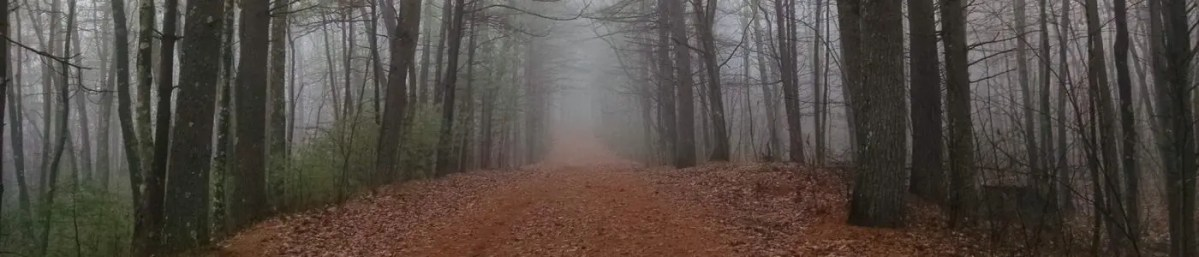 Fog through the trees at Upton State Forest