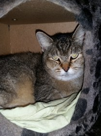 Nala my fave little kitty now Tilly has been adopted. She is so smoochy, hides in her cubby .. and has the cutest face.