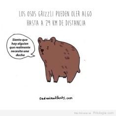 Problemas de animales6