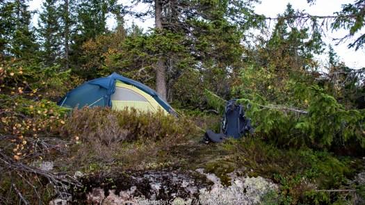 Finfin teltplass i lyngen med utsikt over vannet