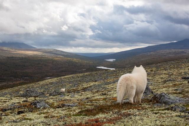 To hunder løse i fjellet