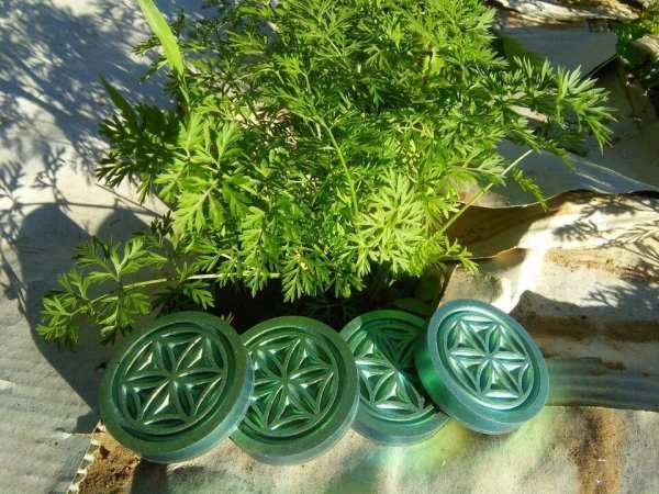 pucks-n-plants