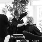 Salon Niester