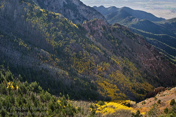 Fall aspens in New Mexico's Sandia Mountain Wilderness