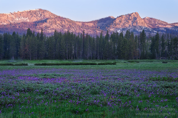 Shooting stars cover Corduroy Meadows in Idaho's Frank Church-River of No Return Wilderness