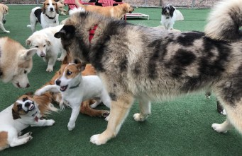 All breeds play together