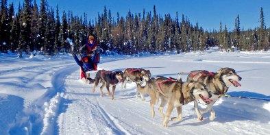 Frisky Pups Dog Sled Rides