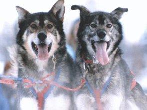Frisky Pups B&B