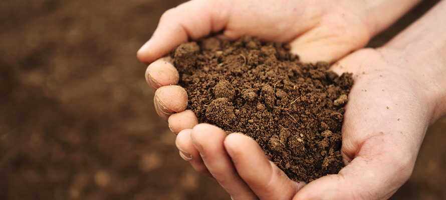 Image result for soil in hand