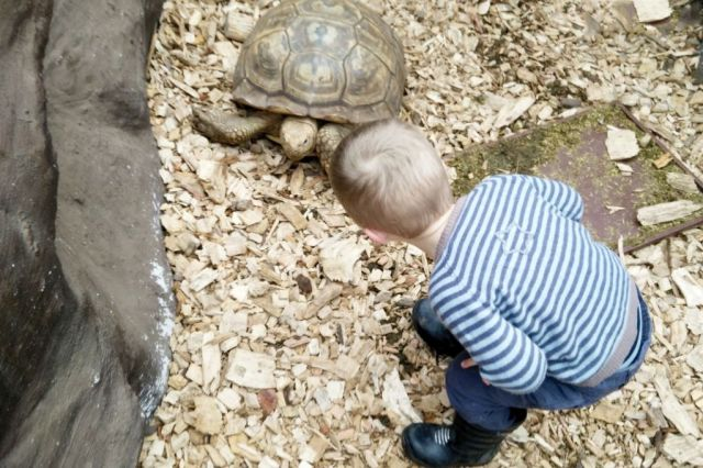 krokodille-zoo, familieudflugt, falster
