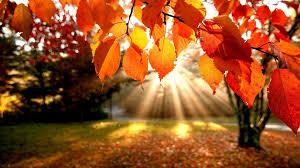 autumnpic