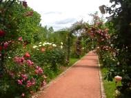 Rose Garden Jardin des Plantes Paris