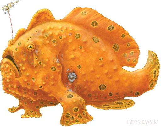 Species: The Frogfish