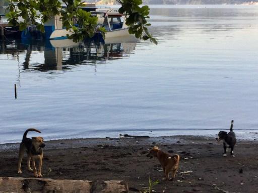 タラサリゾートレンベの犬たち