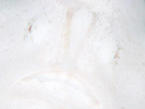 地球の海フォトコン2018(ネイチャー・環境部門)「Snowman」