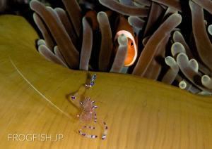 地球の海フォトコンテスト2012 自由部門入賞『家政婦は見た』