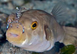 地球の海フォトコンテスト2012 地球環境部門入賞『レディ・ガガ』