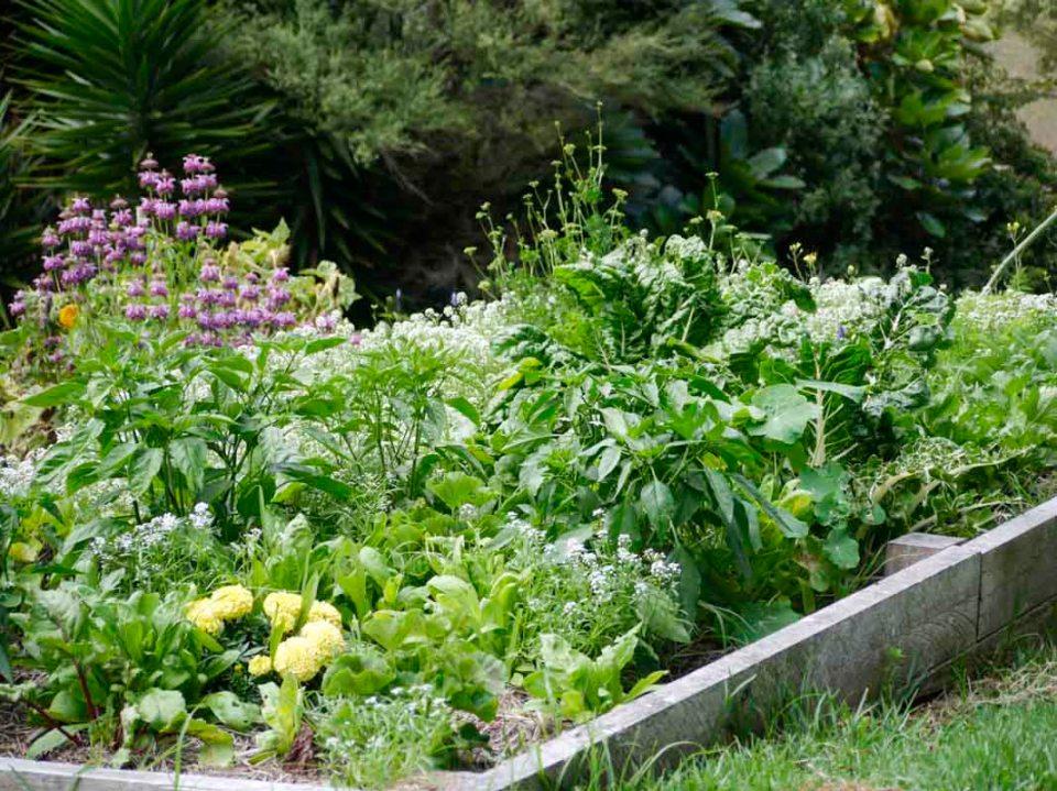 More garden madness .. a jumble of green
