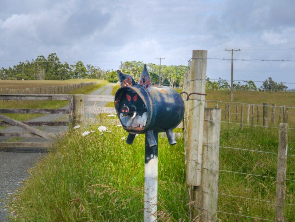 Funky pig letterbox