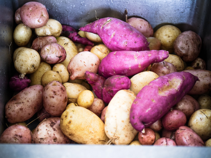 spud and kumara haul
