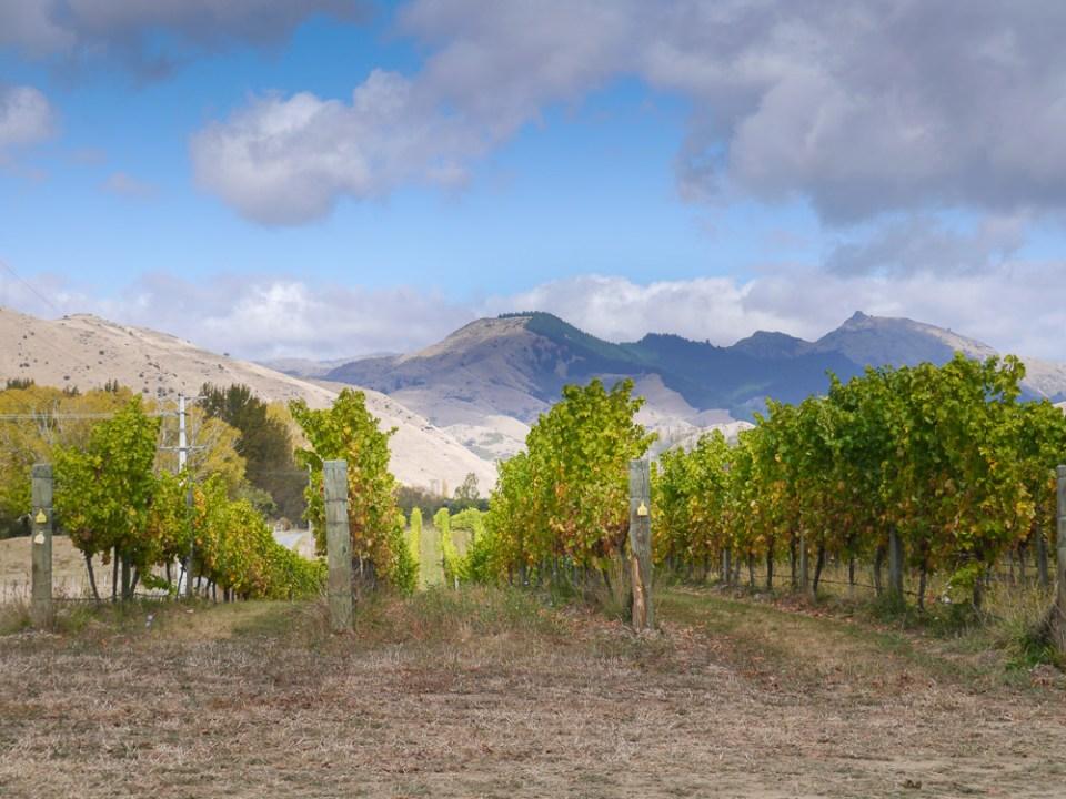 brookdale vineyard marlborough