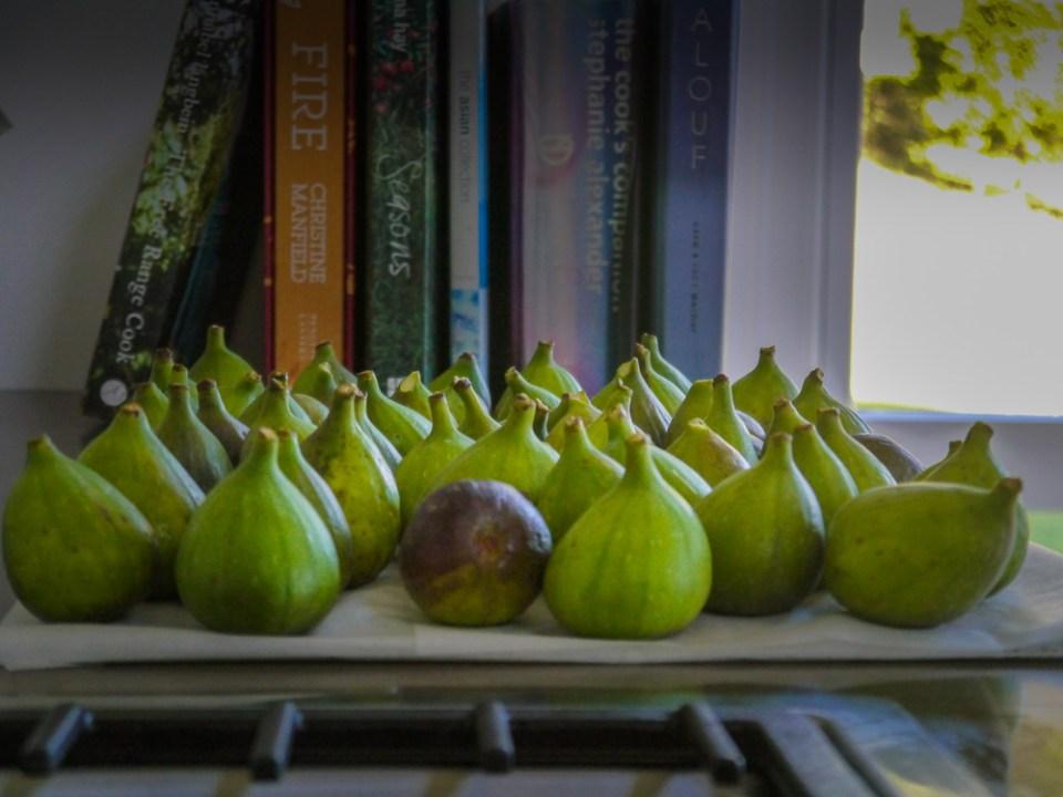 figs-1060165
