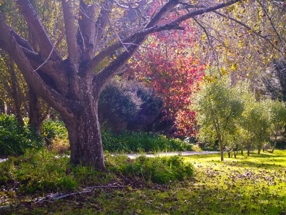autumn-1060742