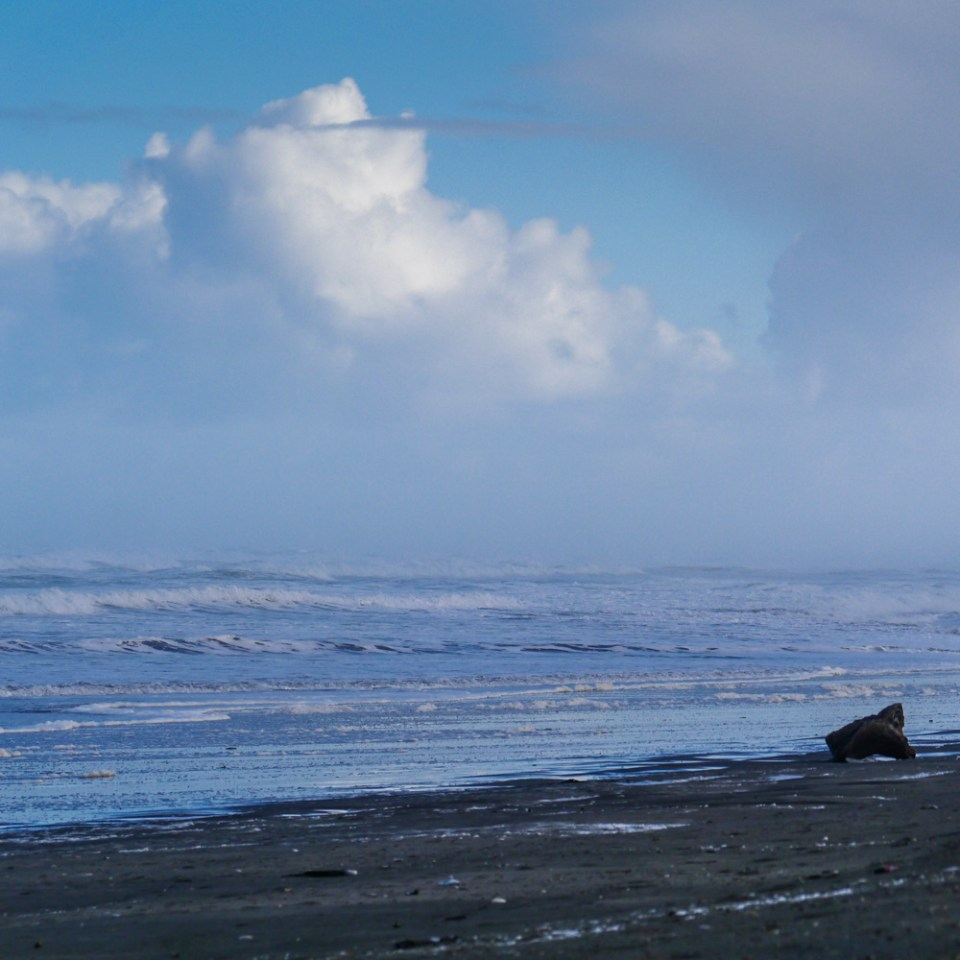 muriwai beach in winter