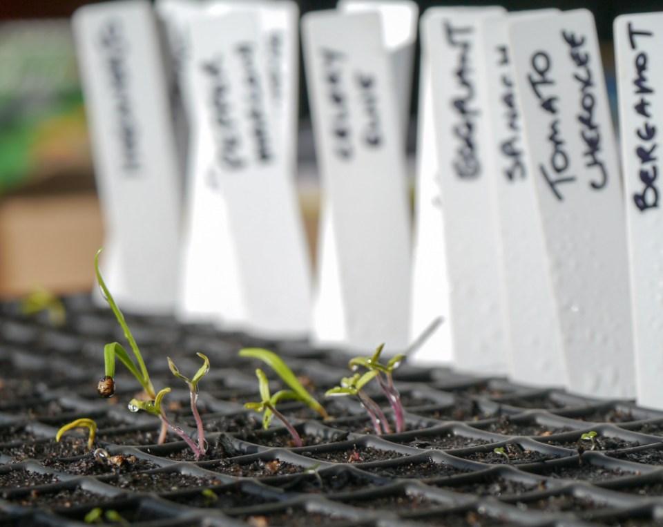 seedlings-1070827