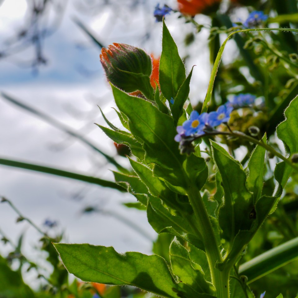 spring flowers-1080548