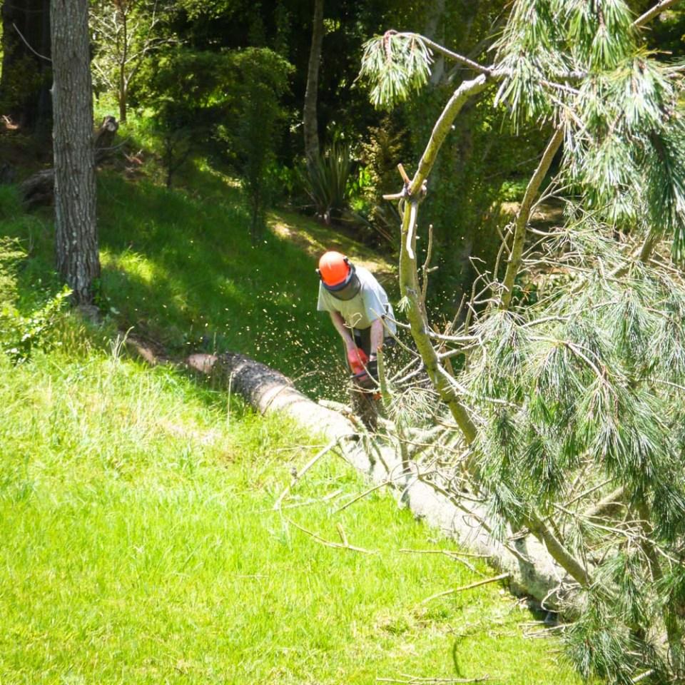 tree-felling-1090063