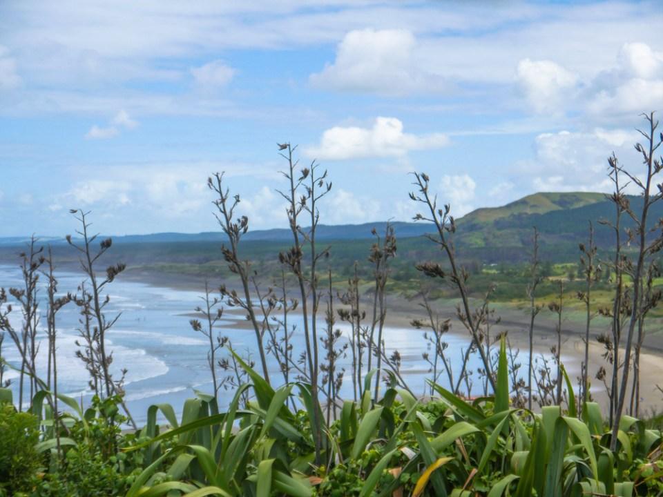 Muriwai beach-1100304